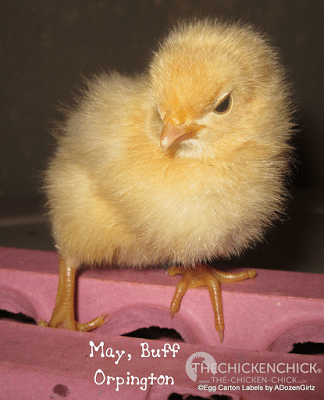 The fuzzy butts were named before they even got to kindergarten.