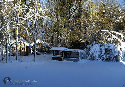 This pre-Halloween snowstorm left us without power for 8 days, wreaked havoc on the roof of the small run and took a toll on many of the trees throughout Connecticut and in our backyard.
