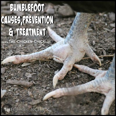 Bumblefoot Causes, Prevention & Treatment at www.The-Chicken-Chick.com
