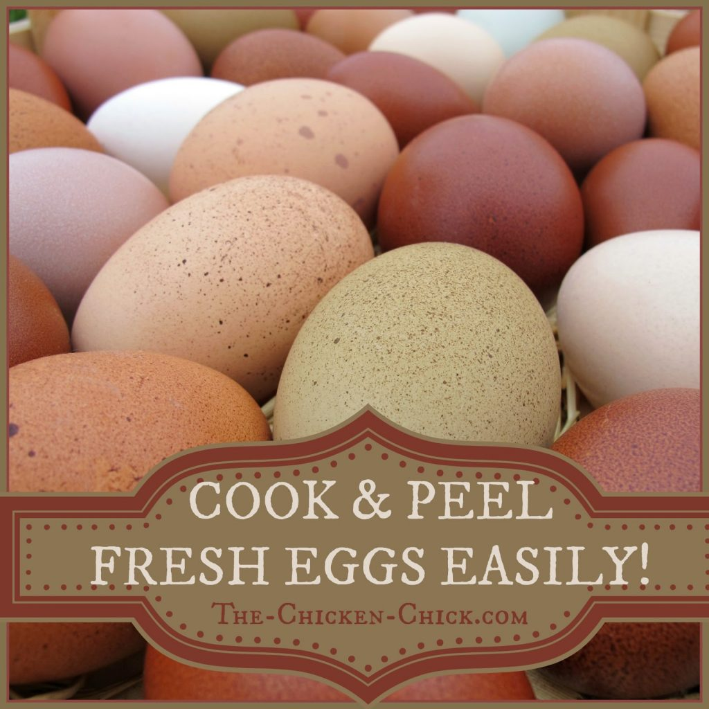 Ever wonder why store-bought eggs are so easy to peel? Simply put- they're old.