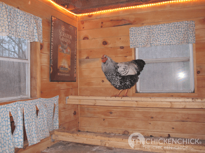 The amount of light is not critical, it should just be enough to allow the hens to see inside the coop. I have an 8 x8' coop and I use a 6 foot, incandescent rope light above the roosts, which is enough to simulate sunrise. In my 4'x6' coop, I use a small string of Christmas lights in the coop and, since we have an electronic pop door opener, I hang strings of Christmas lights around the run and set the pop door to open when the lights turn on. Festive and functional!