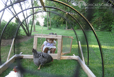 As a play-pen for adolescent chicks being slowly integrated into the flock.