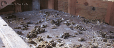 Droppings boards in a coop catch the nightly deposits and keep the bedding cleaner, longer. Scraping down the droppings boards daily provides an opportunity to observe anything abnormal.