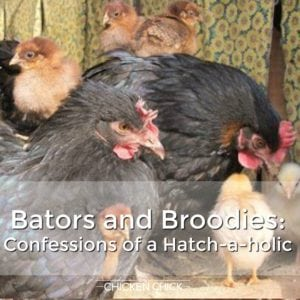 Bators and Broodies: Confessions of a Hatch-a-holic