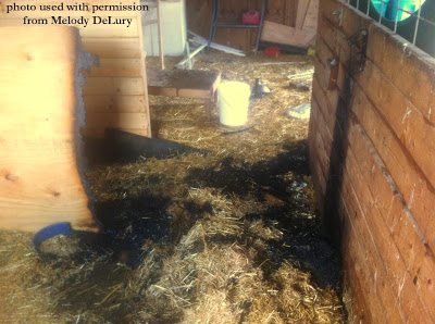 The Dangers Of Brooder Heat Lamps Amp A Safe Alternative