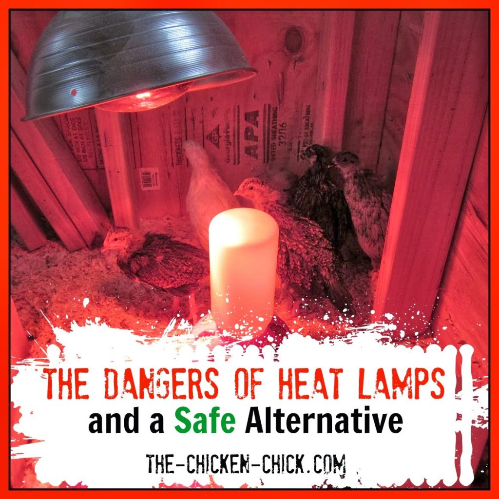 Heat lamps make me nervous, they always have. Every year, news stories recount tales of homes and chicken coops burning down as a result of a heat lamp. Whether from falling, being knocked over, swinging into contact with a flammable object or a bird or loose feather flying up into it, the traditional heat lamp is a fire hazard even when vigilantly employed.