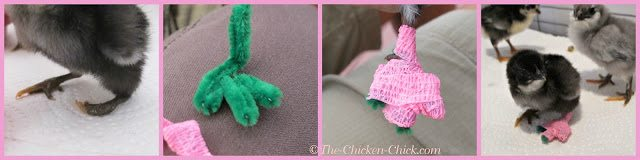 How to fix a chick's crooked toes via The Chicken Chick®