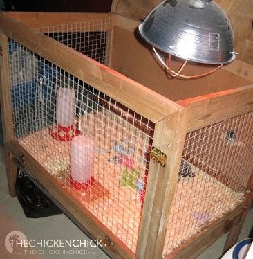 Heat lamp in rabbit hutch brooder.
