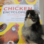 CHICKWITHBOOK