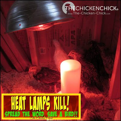 Heat lamps are the worst idea in the history of chicken care. Placing a 500°F surface in a confined area with highly-flammable wood shavings/straw, feathers, water and living creatures is a disaster waiting to happen. I strongly encourage the use of safer heating options.