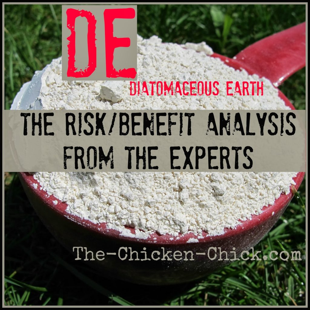 Whether or not to use food grade diatomaceous earth (DE) in one's flock is a decision each chicken-keeper must make for themselves. As a new chicken-keeper, I read quite a lot about DE before purchasing a ten pound bag, thinking that the claimed benefits sounded tremendous, but I wondered whether it was possible for a product that claimed to fix so many problems in humans and animals could be the real deal. I had also read reports of the carcinogenic effects on humans breathing DE and the package warnings to wear a respirator when using it, both of which scared the daylights out of me.