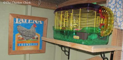They're perfectly happy in a hamster cage that we keep on a dedicated shelf inside our big coop.