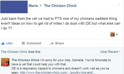 This Facebook follower of mine had to have her hen put to sleep from a severe mites infestation that she had been trying to control with DE, aka: diatomaceous earth, which failed to work as usual.