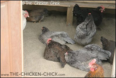 Sand is a very economical, green and healthy chicken coop litter option