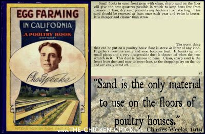 "Poultry visionary, Charles Weeks wrote of the benefits of sand as chicken litter in his 1919 book, ""Egg Farming in California,"" in which he stated: ""Sand is the only material to use on the floors of poultry houses. Clean, dry sand prevents any bacteria from starting. Clean, sharp sand is the freest from dust and easy to keep clean, as the droppings lay on top and are easily lifted off."""
