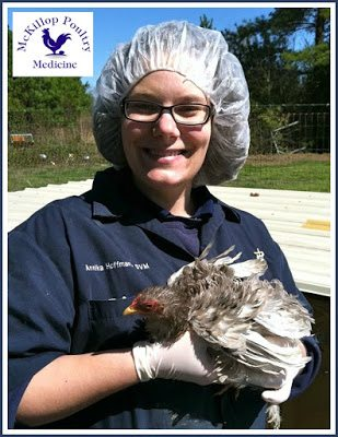"""Maryland Poultry Veterinarian, Dr. McKillop, DVM, MSpVM, DACPV states, """"Sand is a wonderful litter/ground source for backyard poultry. I advise all of my clients to go from shavings to sand."""""""