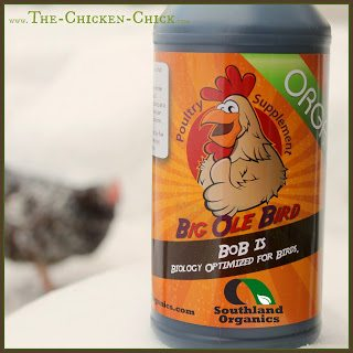 Big Ole Bird poultry probiotics