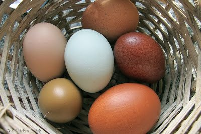 Most cases of Salmonella are transmitted by eggs that are infected INSIDE the hen's ovary.