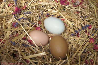 I never use fresh herbs underneath a broody hen; the humidity and warmth of the hen's body can cause a hastening of decomposition and encourage the growth of mold, endangering the embryos and the health of the hen and any chicks that hatch.