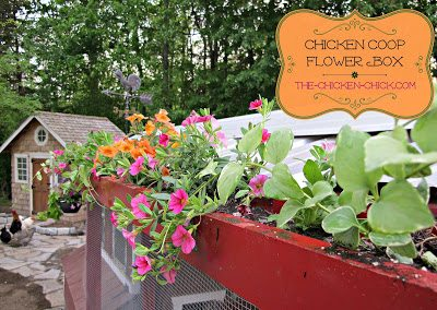 After having recently remodeled the front of our chicken run, I felt we needed to add some interest to it and, on a whim, put my husband to work making a flower box. The beauty of this micro flower garden is that the chickens can neither eat them nor trample it!