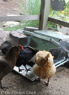 Grandpa's Poultry feeders have a cantilevered lid over the feed trough that lifts to expose the feed when a chicken steps onto the attached platform and closes when the chicken steps off it.