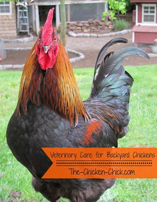 Veterinary Care for Backyard Chickens, a Dialogue that ...
