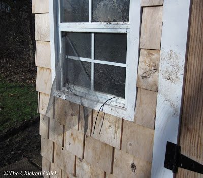 Window screens will not keep predators out. Screws and washers should secure the hardware cloth to the structure, not staples.