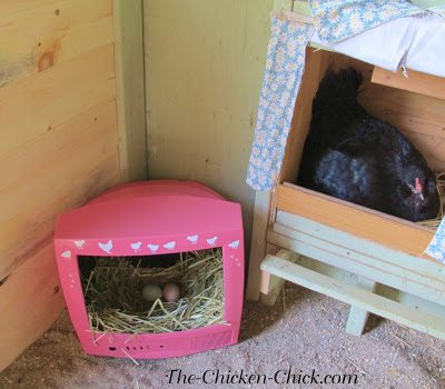 I can confirm that CHICK TV is officially a hit! While my husband was in and out of the coop installing wall boards, he said layers were waiting in line for CHICK TV! The broody in the nest box below hatched her chicks days later in peace, without being agitated by other hens.
