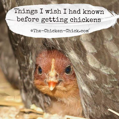 Chickens are a joy to keep for many reasons. If you can, just do it!