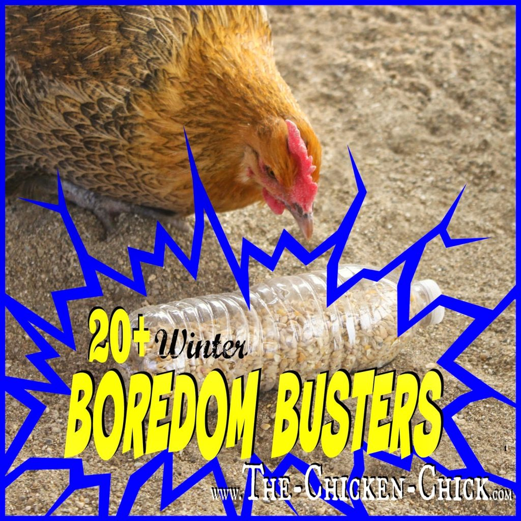20+ boredom busters for backyard chickens