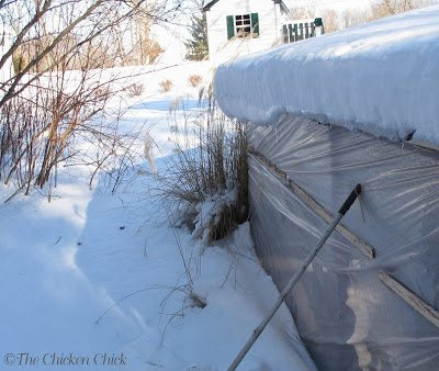 provide outdoor shelter and windbreaks for protection when temperatures are severe and windchills reduce them even further. Chickens should have a protected outdoor space to avoid confinement in the coop.