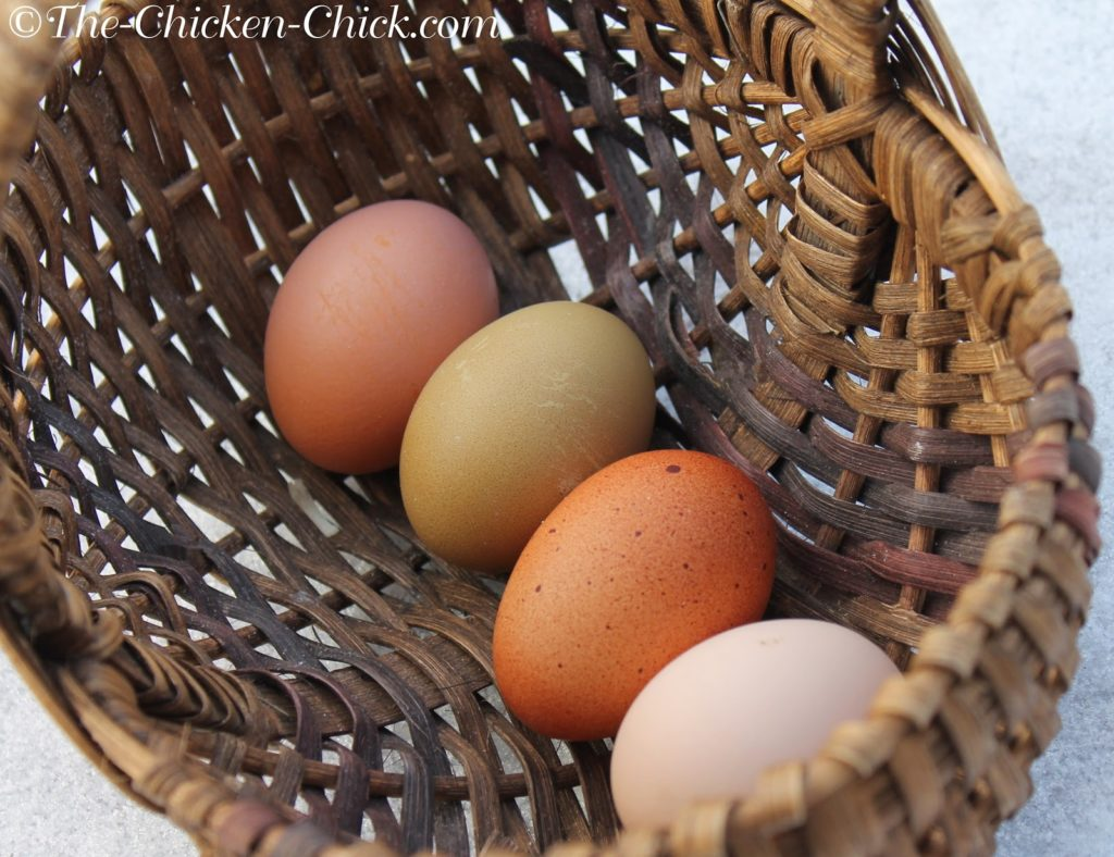 DO collect eggs frequently.