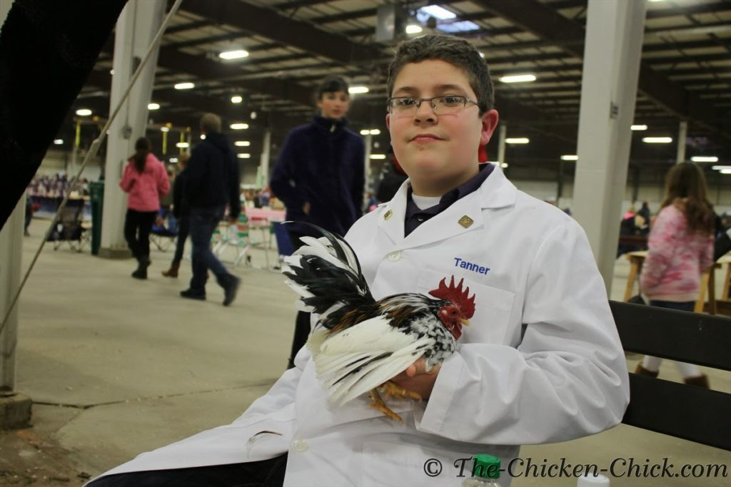 Junior exhibitor with his Serama cockerel