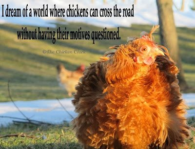 Rachel 1 The Chicken Chick 174