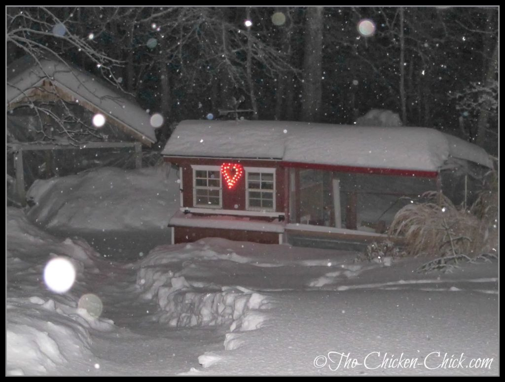 My chicken coops at night during a snow storm