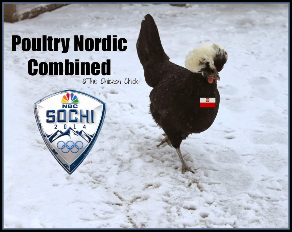 Poultry Olympics, Nordic Combined