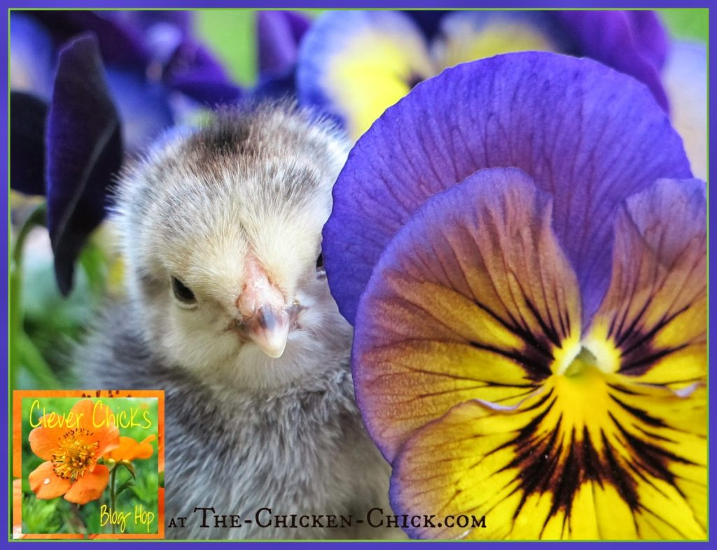 Clever Chicks Blog Hop