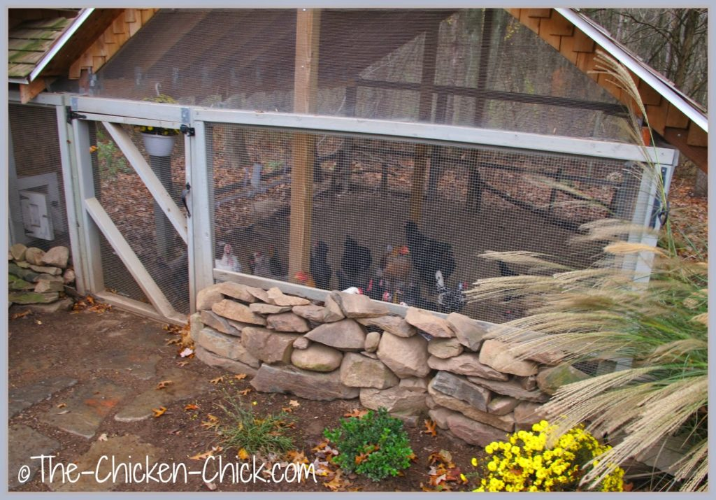 This photo was taken just prior to Hurricane Irene in October, 2012. If my chickens could have gotten hold of tin cups, they would have been rattling them on the jailhouse bars.