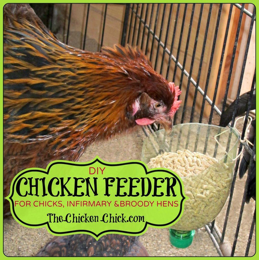 DIY Chicken Feeder for Brooder