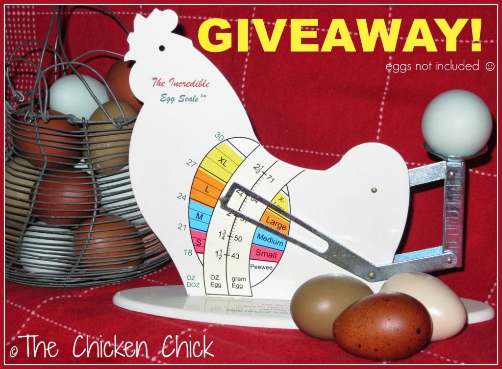The Incredible Egg Scale GIVEAWAY at The-Chicken-Chick.com