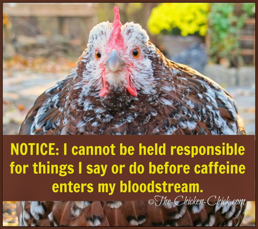Notice: I cannot be held responsible for things I say or do before caffeine enters my bloodstream.