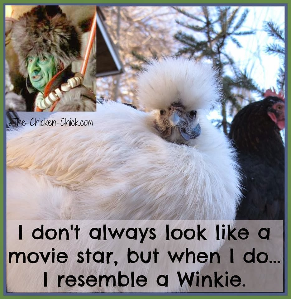I don't always look like a movie star, but when I do...I resemble a Winkie