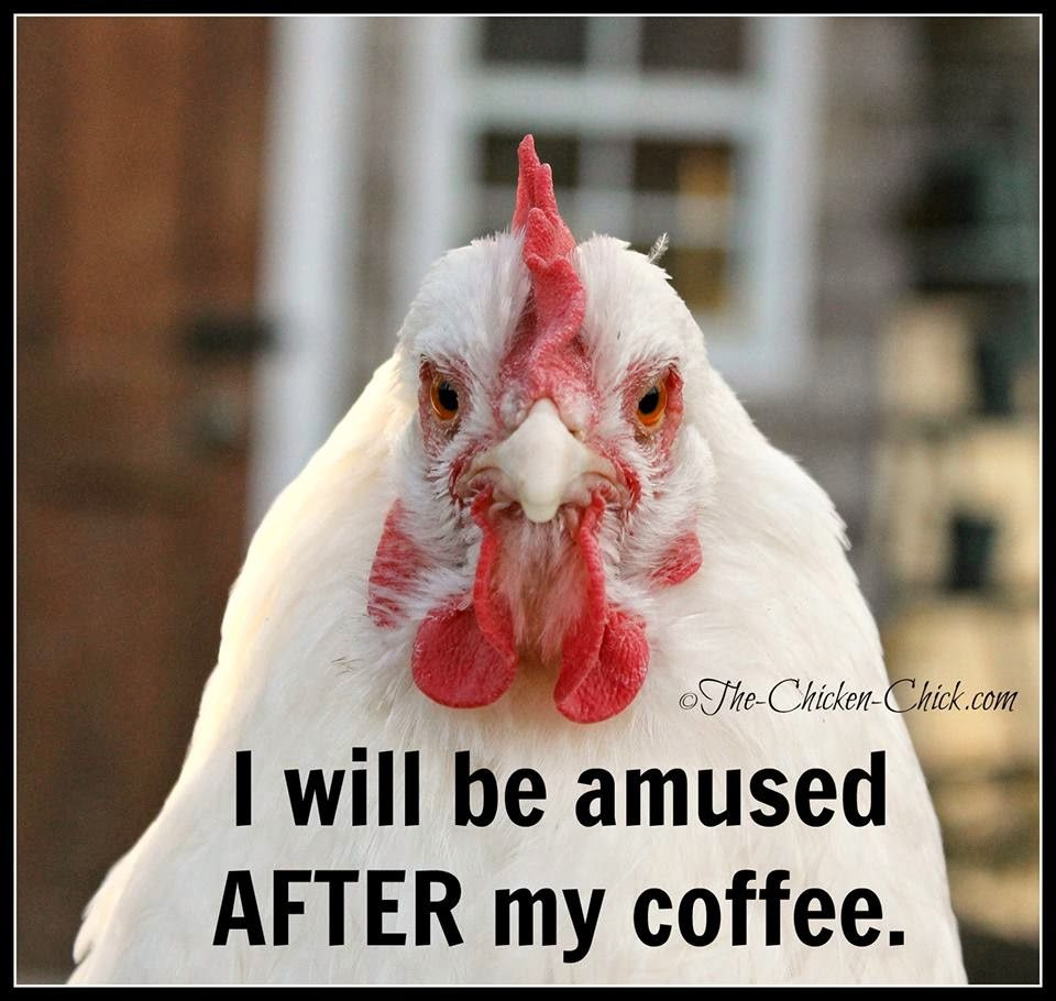 I will be amused AFTER my coffee.