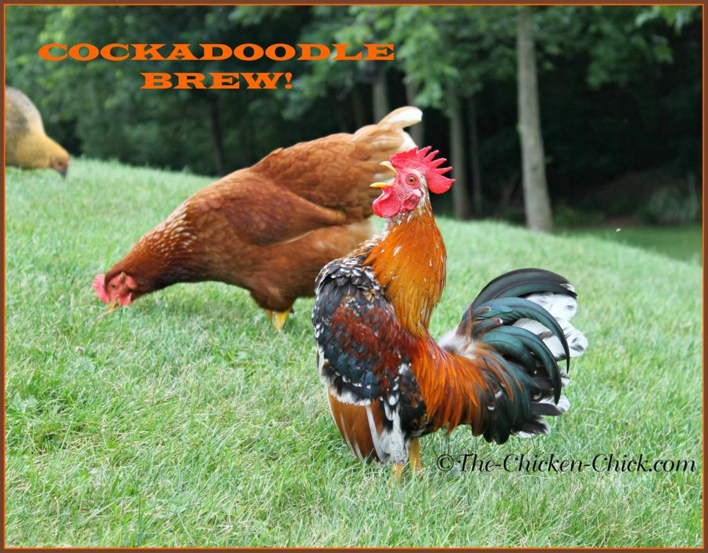 Cockadoodle BREW! (Serama cockerel)