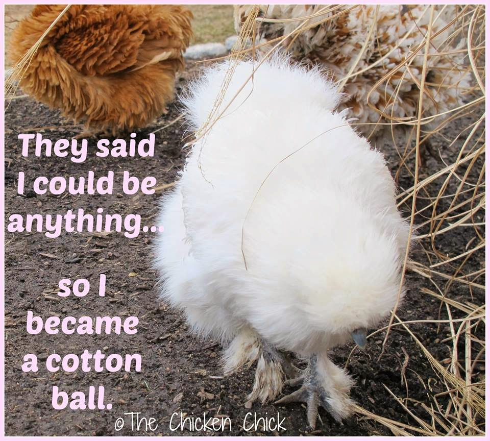 They said I could be anything...so I became a cotton ball.