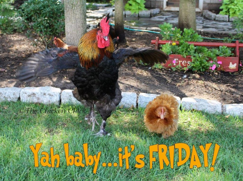 Yah baby...it's FRIDAY!