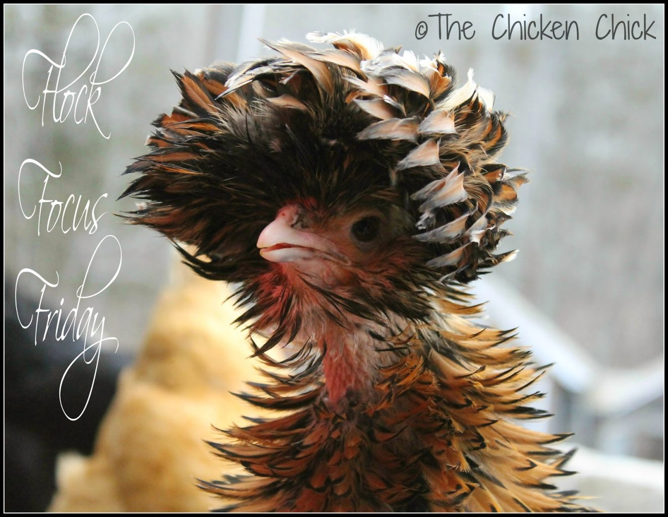 4 1 14 181 The Chicken Chick 174