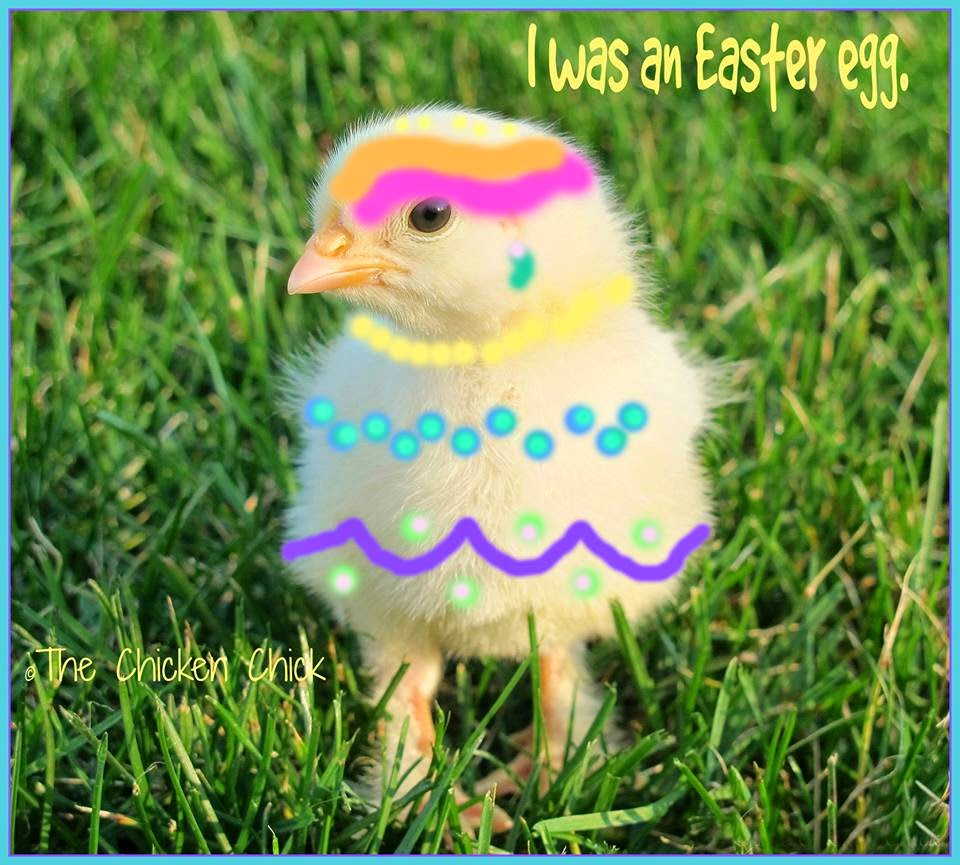 I was an Easter egg.