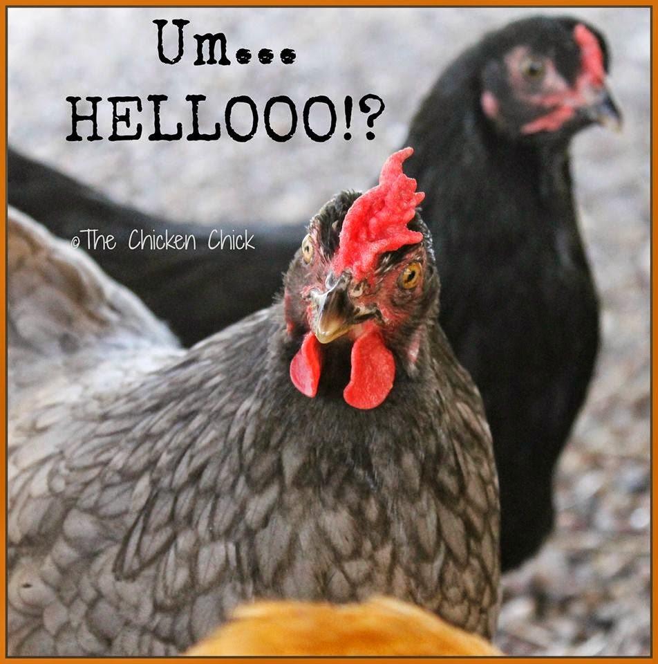 Um...HELLOOOO!?