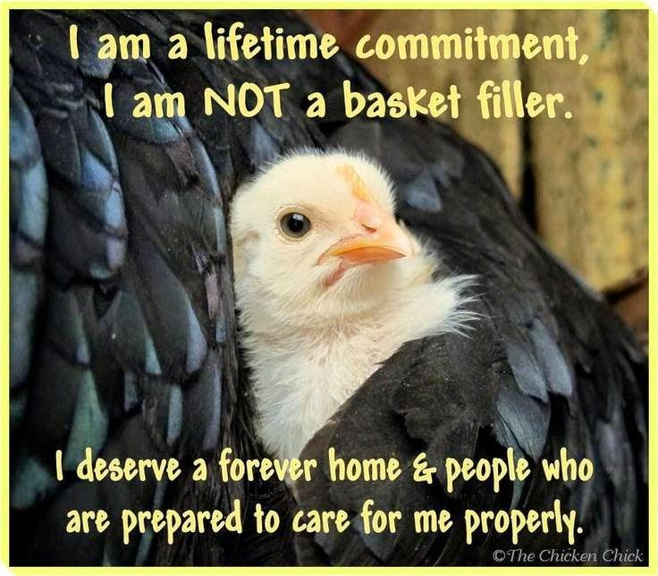 I am a lifetime commitment, I am NOT a basket filler. I deserve a forever home & people who are prepared to care for me properly.